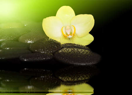 black stones: Flower orchid and black stones Stock Photo