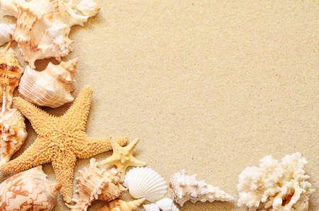 schelpen op de kust in tropisch strand