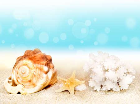 beach paradise: seashells on seashore in tropical beach