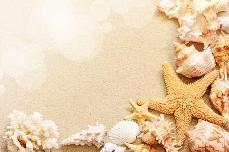 zeeschelpen op kust in tropisch strand Stockfoto