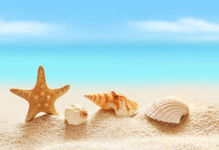 seashell: Sea shells with sand as background. Summer beach. Stock Photo