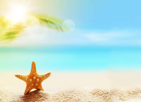 starfish on the sandy beach and palm at ocean background Imagens