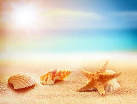 warm water fish: Starfish and seashells on the sandy beach. Summer time.
