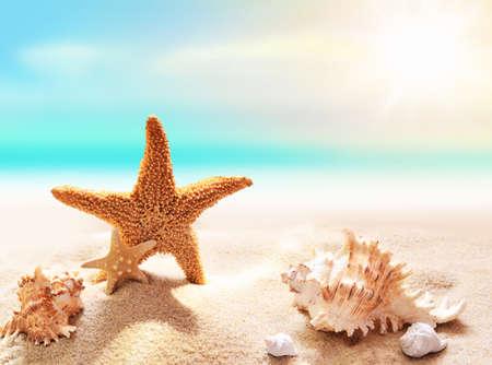 seashell: Shell and starfish on sandy beach and blue sky