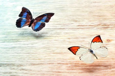butterflies flying: colored butterflies flying over a light wooden background