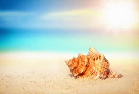 seashell: Sea shell on the sandy beach. Tropical landscape