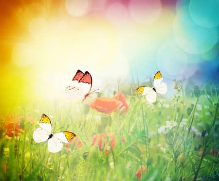 mariposas volando: mariposas volando sobre un prado de flores. brillante paisaje de verano