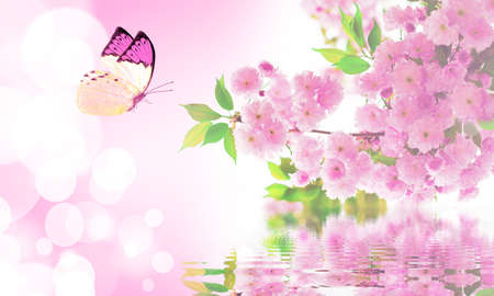 japanese apricot flower: beautiful butterfly flying over the cherry blossoms