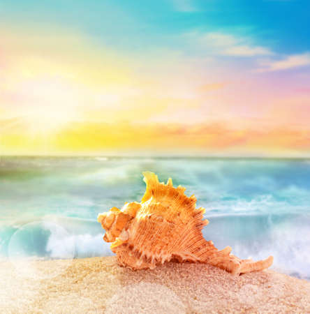 murex shell: Sea shell with thorns on bright sea background Stock Photo
