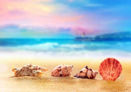 seashell: Beautiful seashells on the sand by the sea