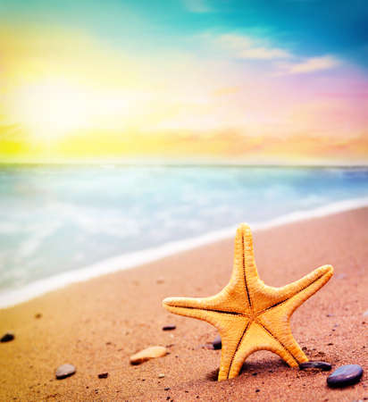 warm water fish: Big starfish on the beach. Summer time Stock Photo