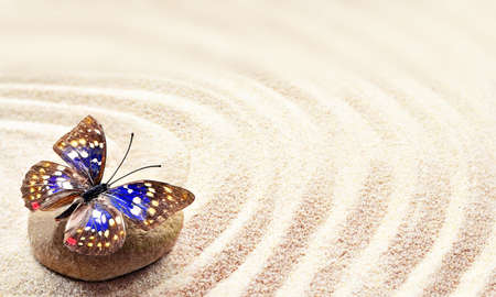 raked: Butterfly on a rock. Background of sand with circles