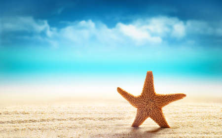 warm water fish: Starfish in the sand on the beach. Tropical landscape