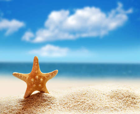 starfish: Summer beach. Starfish on a sandy beach. The ocean, the beautiful sky. Stock Photo