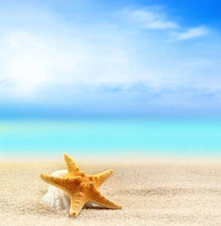 stella marina: conchiglia e stella marina sulla spiaggia di sabbia di sfondo oceano Archivio Fotografico