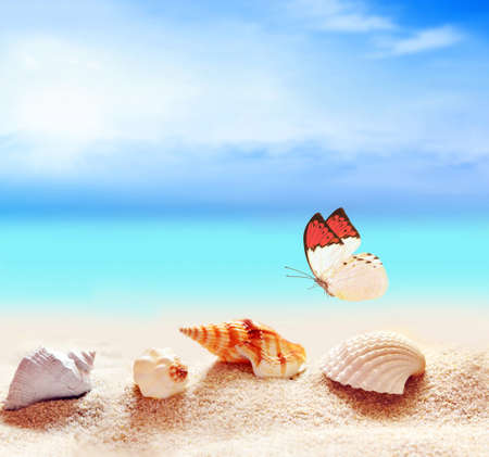 beach butterfly: Summer beach. Butterfly and seashell on the sand. Stock Photo
