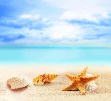 조개와 바다 배경에서 모래 해변에 불가사리 스톡 콘텐츠