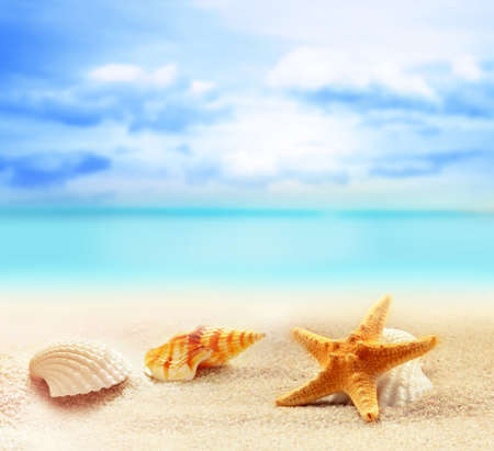 seashells and starfish on the sandy beach at ocean background