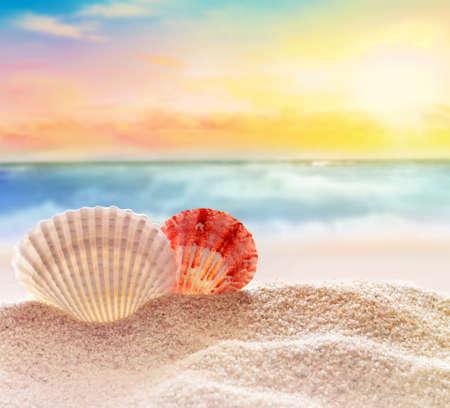 seashell  on the sandy beach  at ocean background Stock Photo