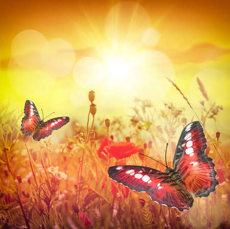 landscape flowers: Beautiful butterfly and nice flowers. Summer landscape Stock Photo