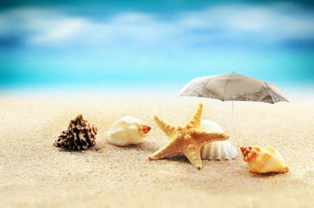 warm water fish: starfish with parasol and shells on the sandy beach