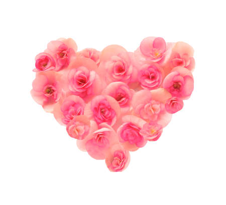 Flower begonia forming a heart shape against white background