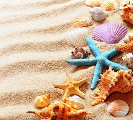 beach sand with colored shells and starfish