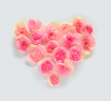 forming: Flower begonia forming a heart shape against white background