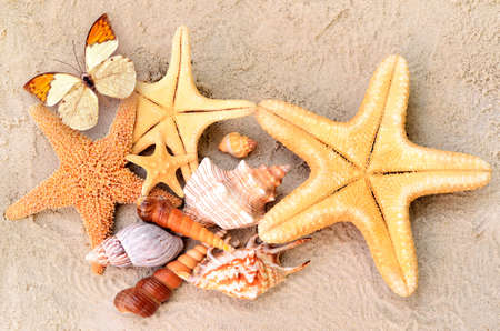 beach butterfly: A lot of seashells, starfish and butterfly on sand. Exotic concept. Summer beach. Stock Photo