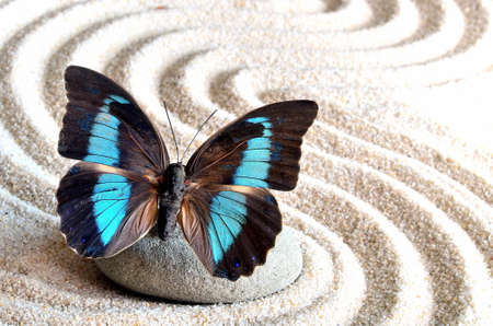 beautiful butterfly and a stone on the white sand with the waves Stockfoto