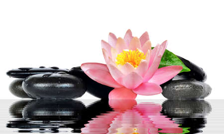 black stones: Water drops on black spa stones with Lily flower isolated on white background. Spa concept. Stock Photo