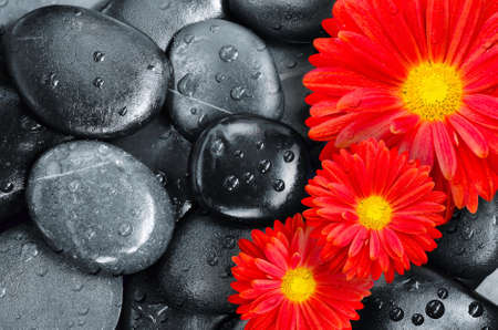 black pebbles: red flower on black pebbles in water drops as background Stock Photo