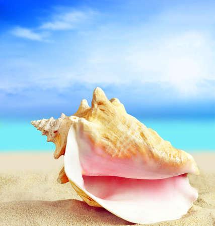 Seashell on the sand beach. Summer concept.