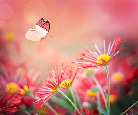 Beautiful butterfly and nice flowers. Summer landscape Stock Photo