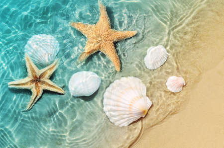 Starfish and seashell on the summer beach in sea water. Summer background. Summer time.