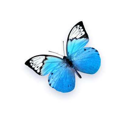 Blue butterfly isolated on white background. Beautiful insect Stok Fotoğraf - 106809964