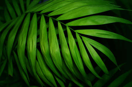 Tropical palm leaves green texture background