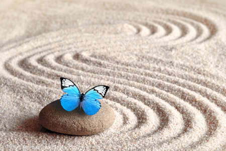A blue vivid butterfly on a zen stone with circle patterns in the grain sand Imagens - 112535239