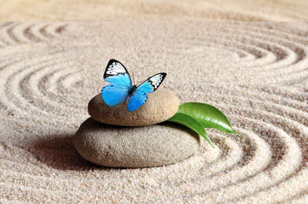 A blue vivid butterfly on a zen stone with circle patterns in the grain sand