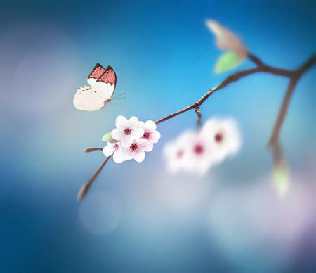 beautiful butterfly on white flower, sky background. 免版税图像