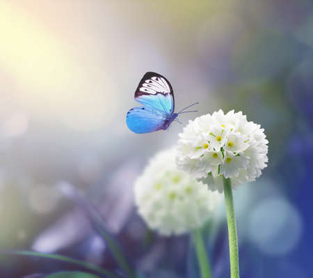 White scope flowers with blue plant background and butterfly.