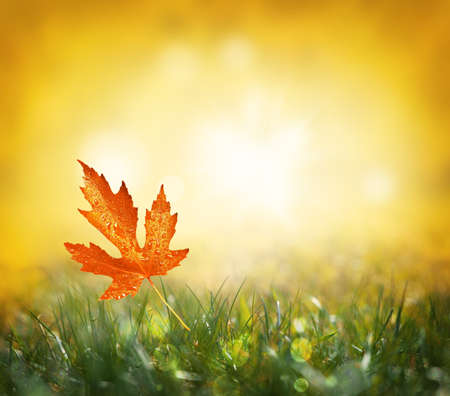 Autumn background. Yellow leaf in autumn park on a blurred background. Imagens - 124720563