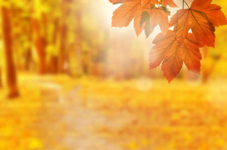 Autumn background. Yellow leaf in autumn park on a blurred background.
