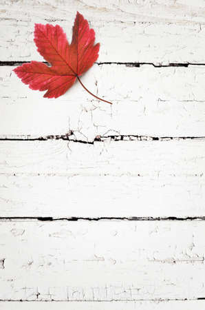 Autumn background of fall leaves on the wooden board, top view.