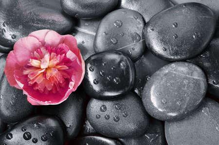 Satz rote Blume auf grauen Kieselsteinen als Hintergrund.