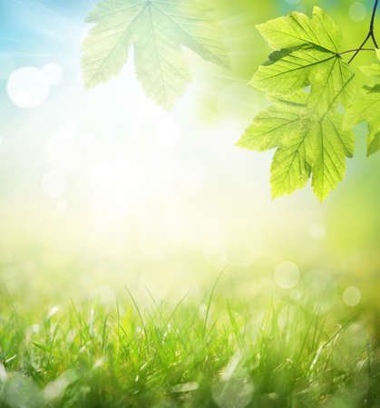 Background of green leaves and grass, summer or spring season. Background natural green plants landscape, ecology.