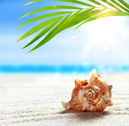 Summer beach with seashell in white sand and tropical palm leaf.