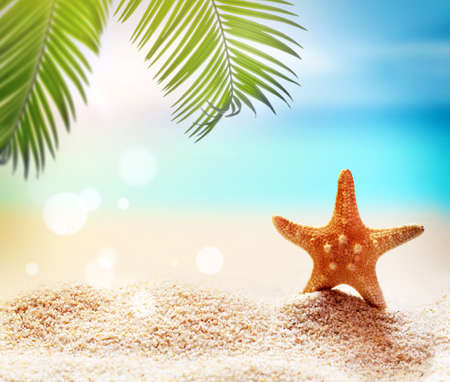 Starfish and palm on the sandy beach. Summer time. Summer concept.