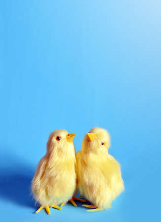 Two yellow chicks on a blue background. Stock Photo