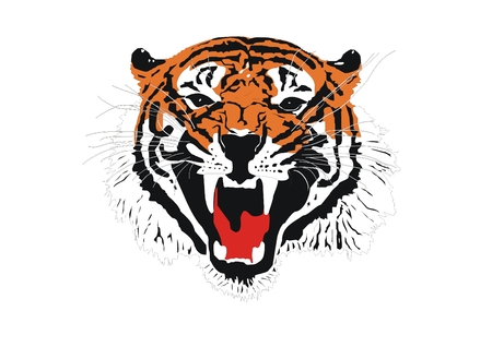 panthera: Sumatran tiger head Illustration